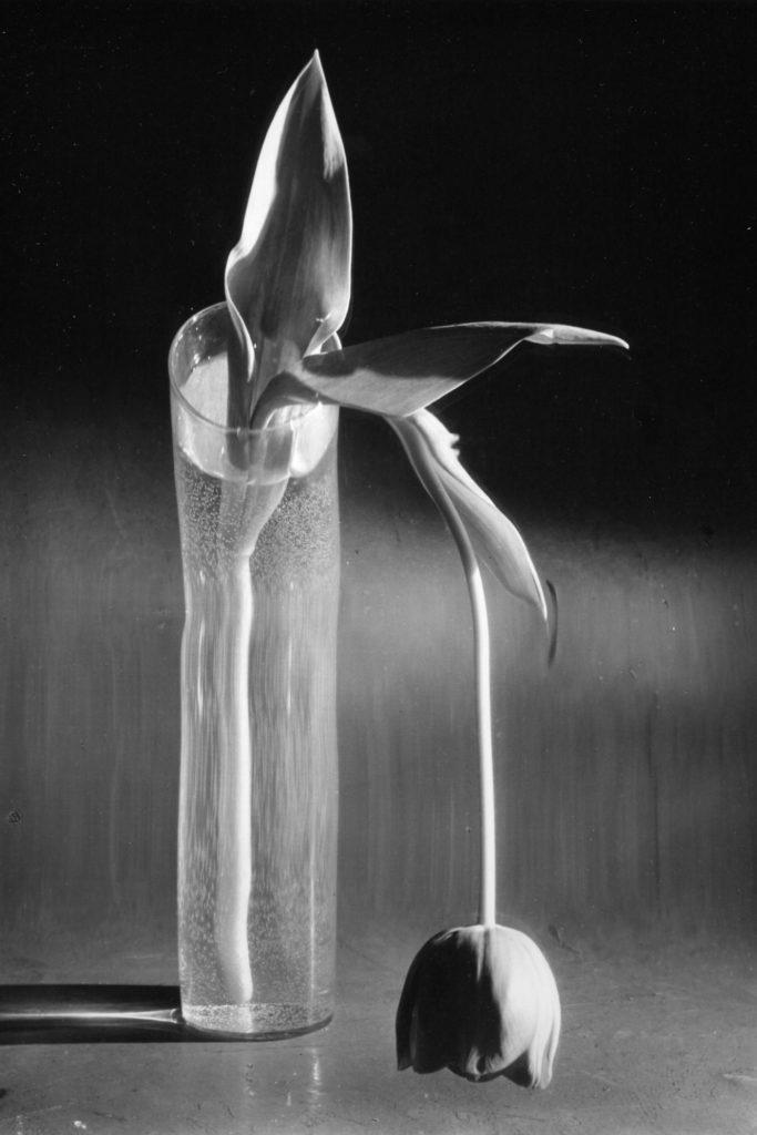 photo de andré kertész poésie